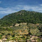 Spar penge på afbudsrejser til Mallorca